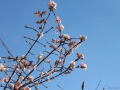 Blüten in Bad Nauheim