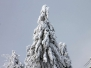 Feldberg im Winter